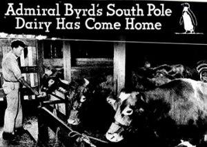 Byrd Larro cow advert 1935?