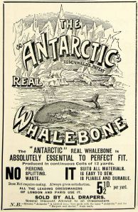 whalebone corset 1895 Ad Antique Victorian Antarctic Whalebone Whale Dressmaking Fitting Fashion